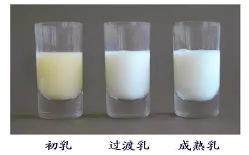 喜课堂|前奶、后奶、稀奶、稠奶,究竟哪个营养值更高呢?